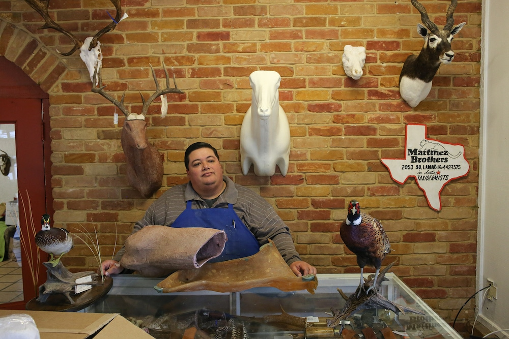 Alex Martinez Jr behind the counter of his family taxidermy shop in Austin.