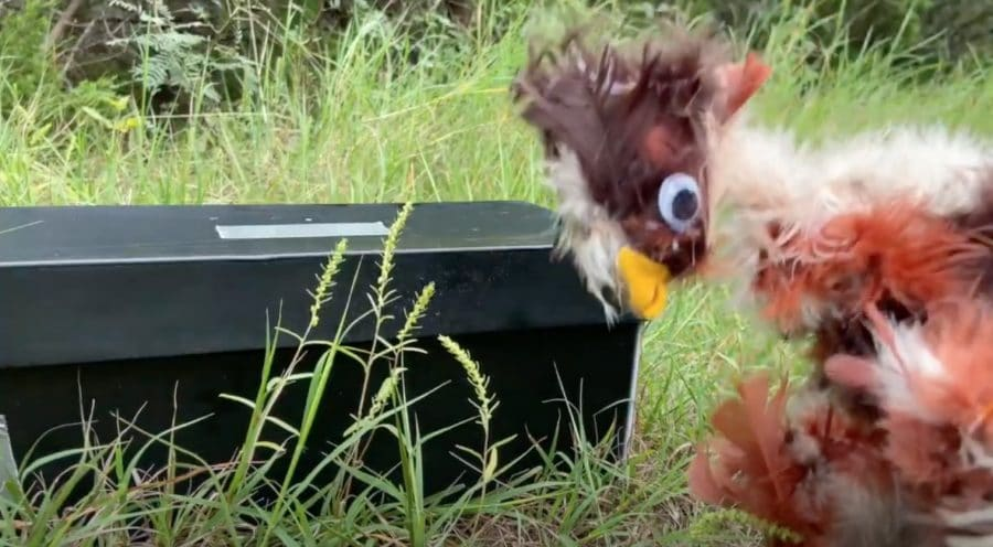 """Katie Svatek's """"Flat Hens Don't Lay Eggs or How the Chicken Crossed the Road"""""""