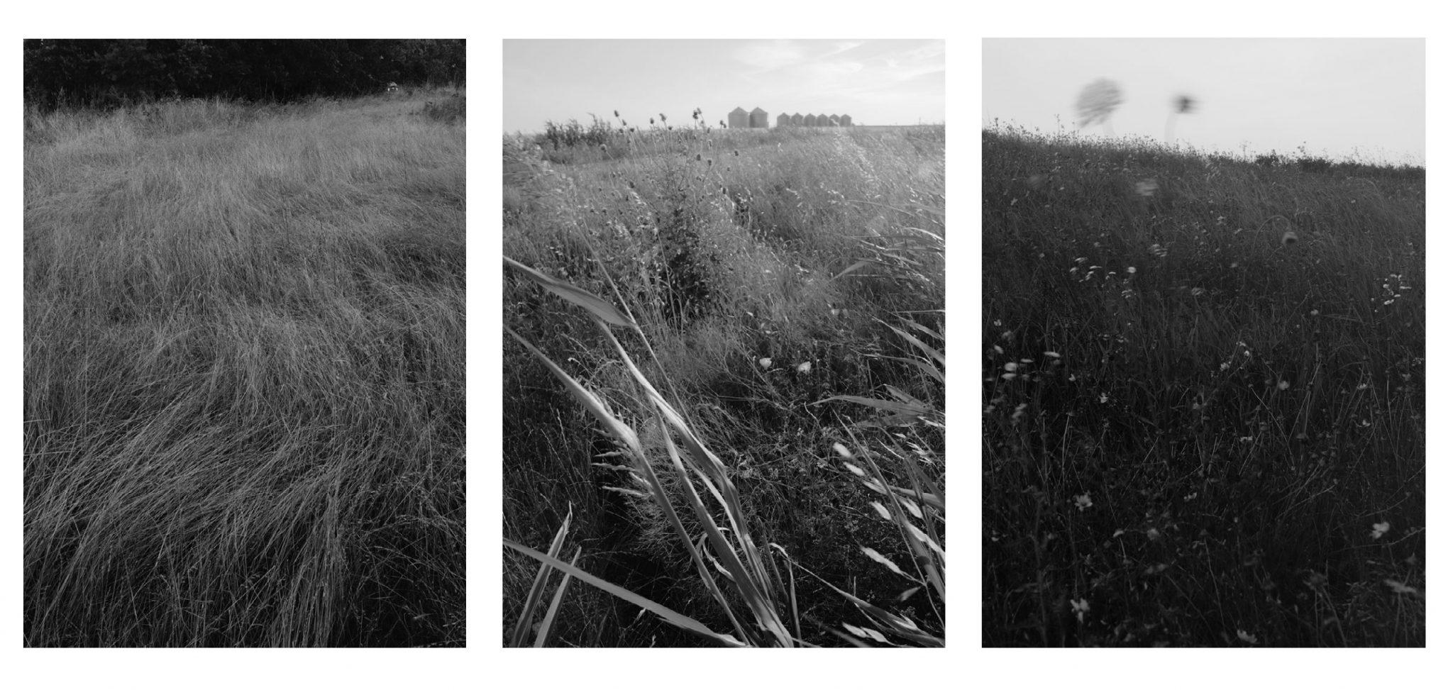schumaat grass