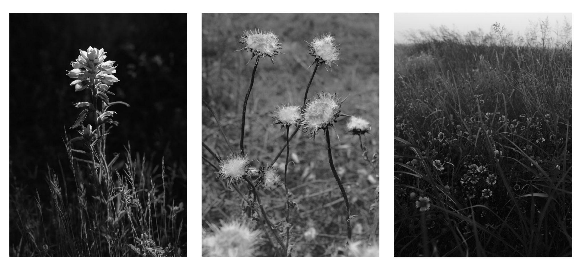 Schumaat flowers
