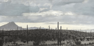 · The Outrage (MGM 1964), a view of southwestern United States, the Sonoran Desert, in the 1870s - Back Painted Translucent 30' x 93'